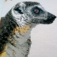 Lemur face detail